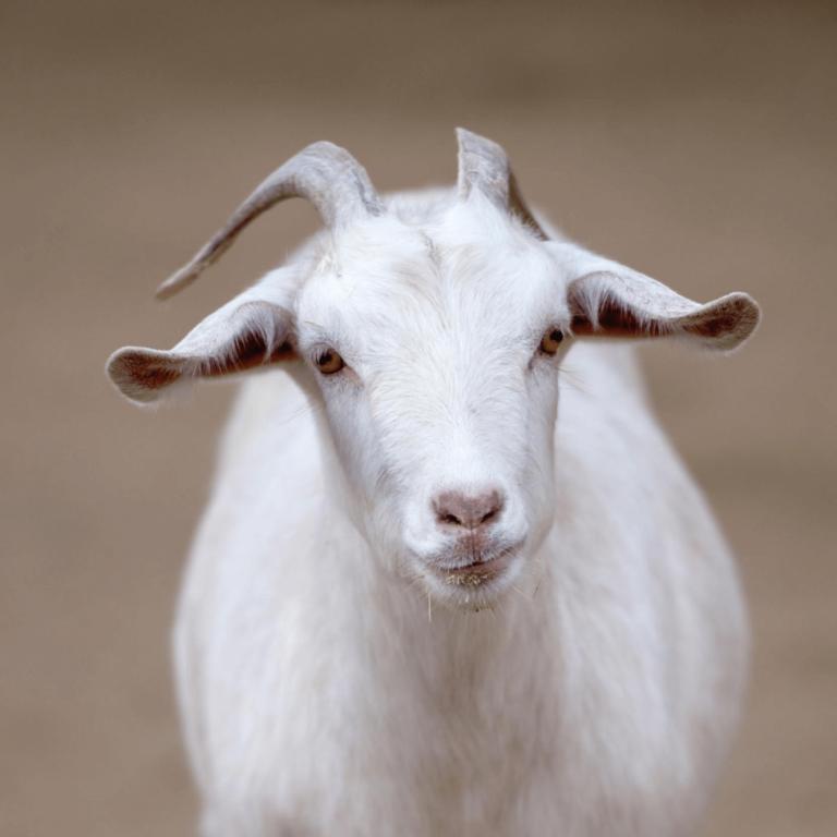 Brake – Carrousel : fromages de chèvre